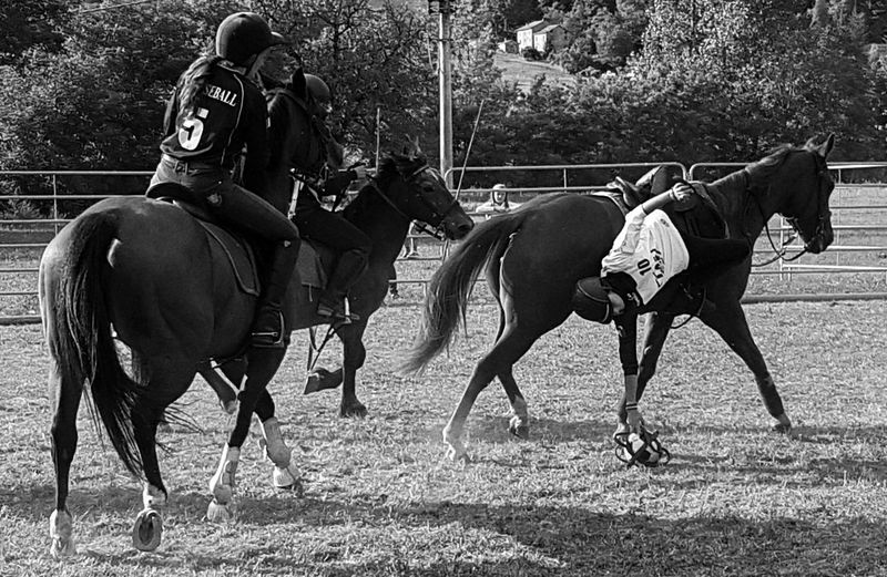 Blackandwhite Outdoors Domestic Animals Real People Countryfair Day Nature Country People Country Life Horse Horserider Carousel Horse Horses Horseball Enjoying Life Cellphone Photography Taking Photos