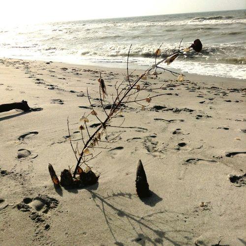 Merry Christmas to you and yours. Christmas Tree Beach Merry Christmas
