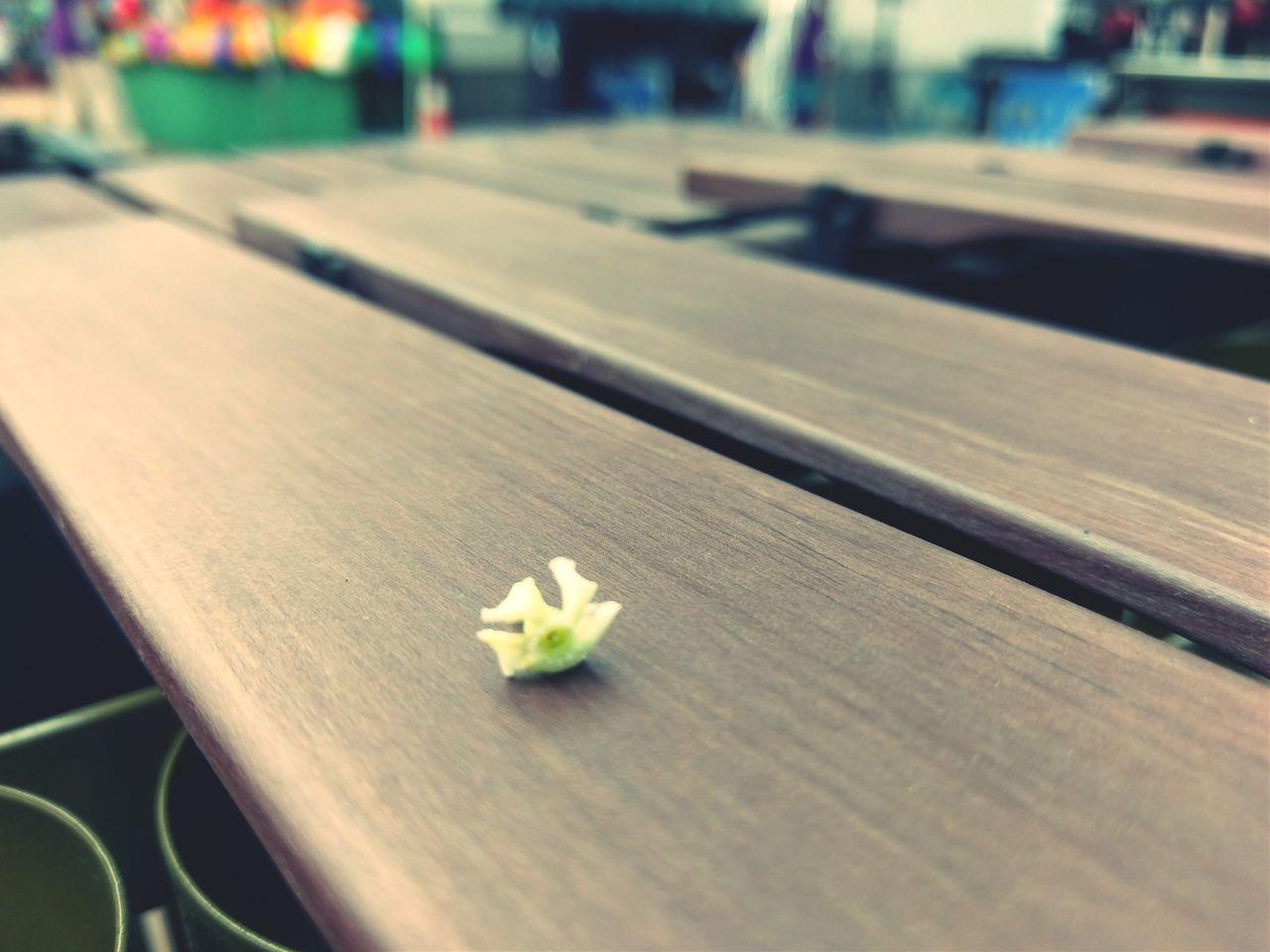 Flower Focus On Foreground Walking Around Traveling Taking Photos Enjoying Life Making Music Open Edit Beautiful Day
