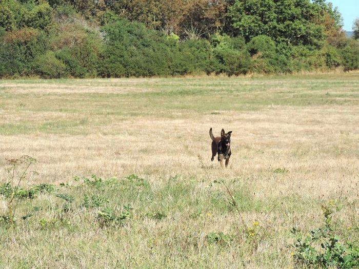 Domestic Animals Dog Animal Themes Landscape Nature First Eyeem Photo