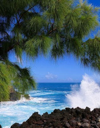 EyEmNewHere Reunion Island Beach Beauty In Nature Blue Day Horizon Over Water Motion Nature No People Outdoors Palm Tree Scenics Sea Sky Tree Water Wave Waves, Ocean, Nature