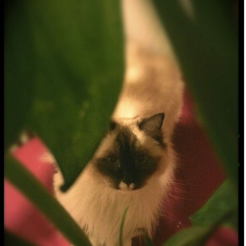 I see you! Cats Pets Theadventuresofpuck