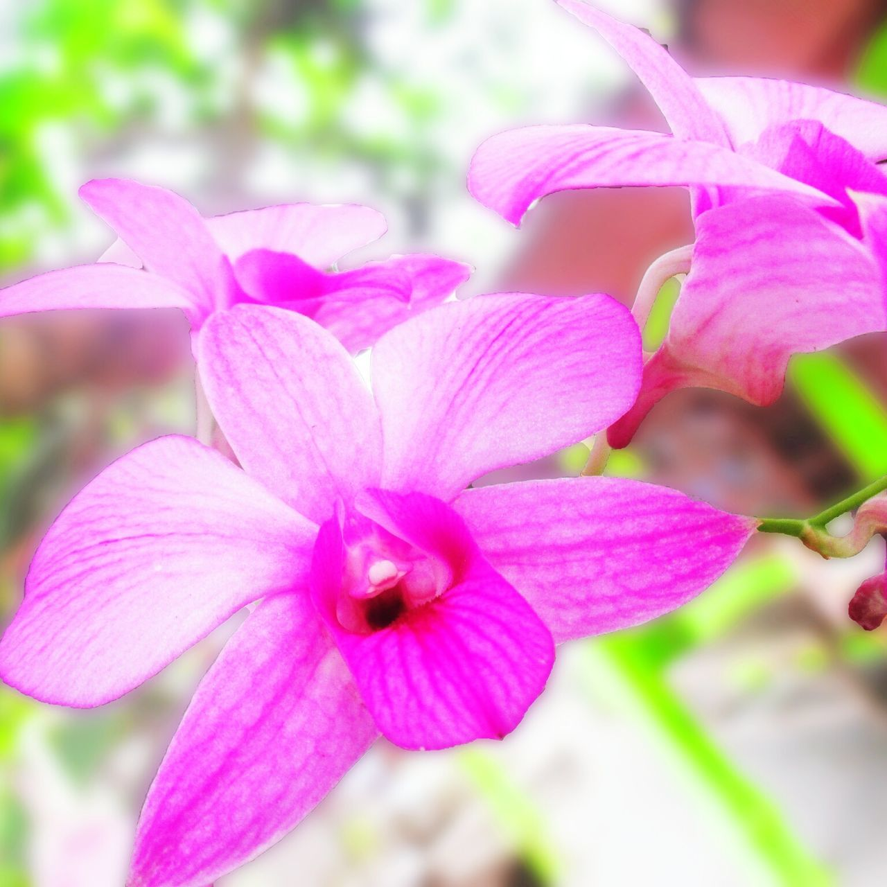 Flower Nature Pink Color Flower Head Orchid Beauty In Nature Close-up Purple Outdoors Fragility No People Freshness Day People Of EyeEm Portrait Eye4photography  Eyeemphoto East Java Nature EyeEm Gallery Java Indonesia Tree Popular EyeEm Architecture