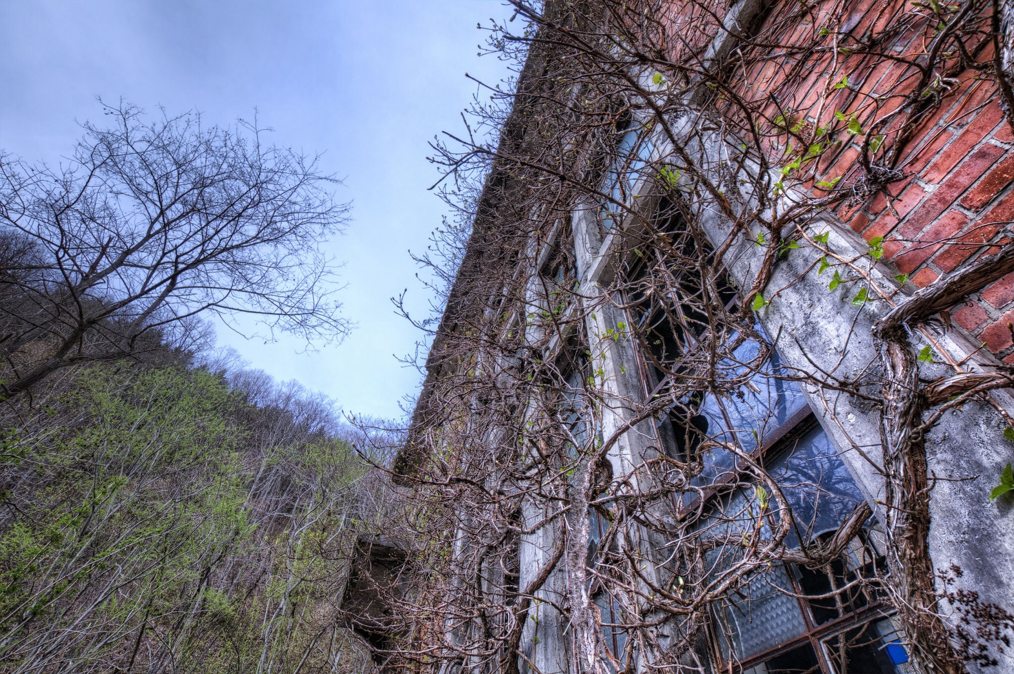 bare tree, tree, built structure, architecture, building exterior, low angle view, abandoned, branch, old, sky, house, damaged, weathered, obsolete, run-down, tree trunk, day, no people, outdoors, deterioration