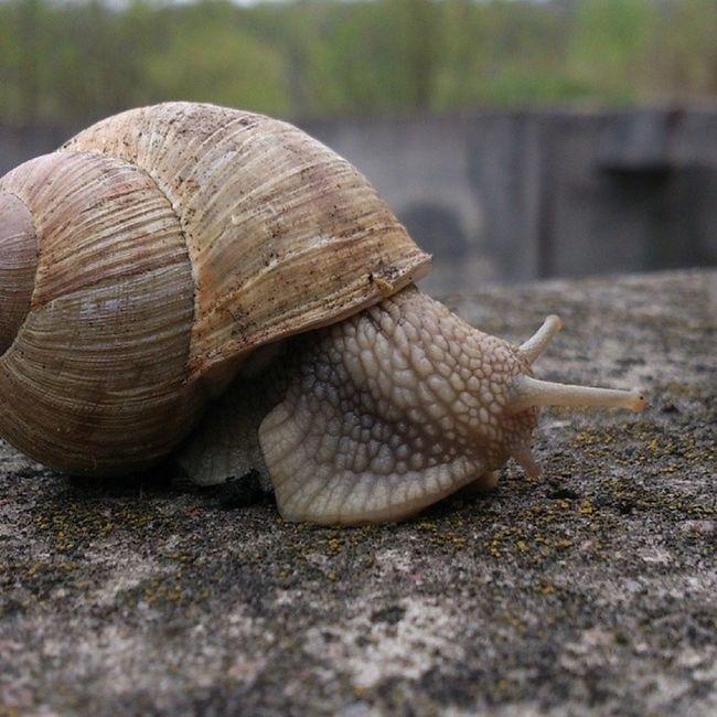Вечерний променад улитка Snail Nature Syrets kievblog insta_kiev дневник_наблюдателя сырец