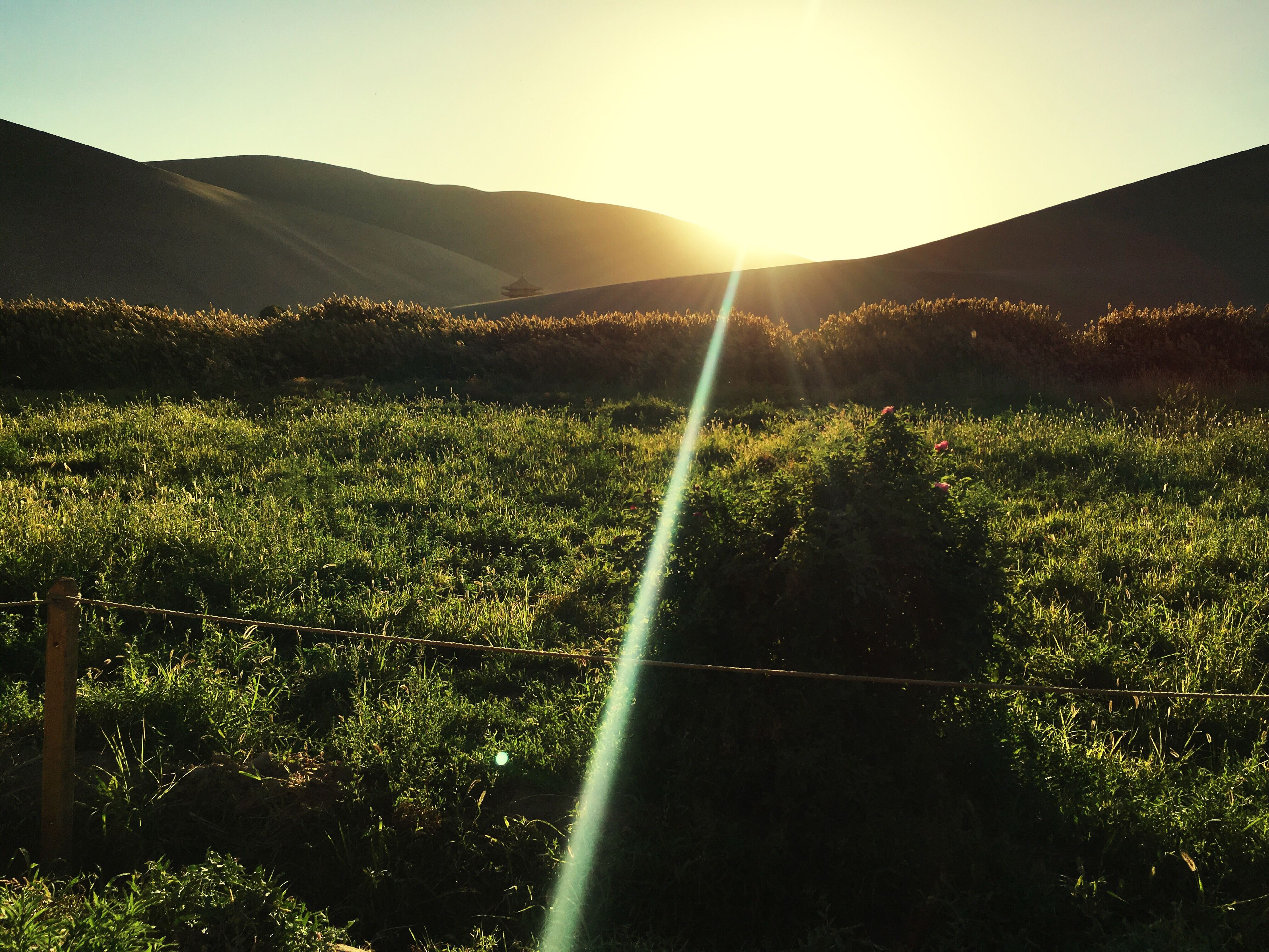 tranquil scene, mountain, landscape, scenics, tranquility, sunlight, beauty in nature, sunbeam, sun, lens flare, green color, nature, clear sky, growth, field, idyllic, remote, plant, non-urban scene, farm, crop, mountain range, outdoors, rural scene, agriculture, green, sky, solitude, countryside, grassy, plantation, no people, lush foliage