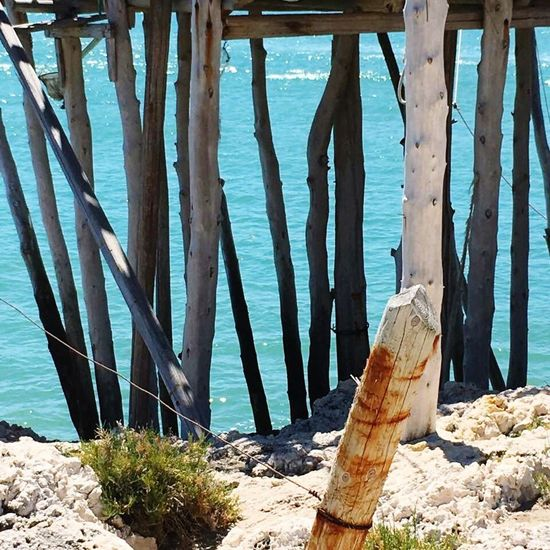 Puglia Sea Water Wood - Material Nature Beach Tree Outdoors Tree Trunk No People Sand Day Sky