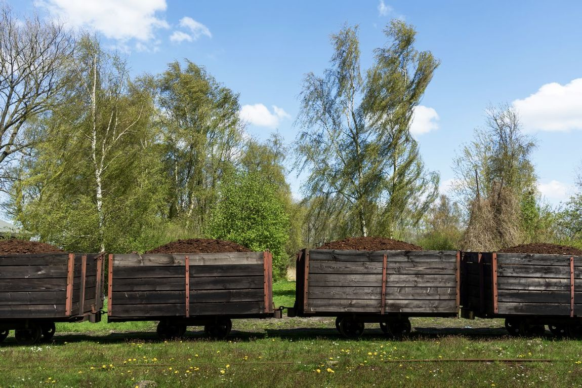 Himmelmoor Container Cutting Day Grass Green Color Growth Landscape Moorland Nature Nature No People Outdoors Peat Rail Rail Transportation Railings Railroad Track Renaturation Sky Tree Turf Turf, Sod; Lawn, Green Turf Cutting Peat Mining