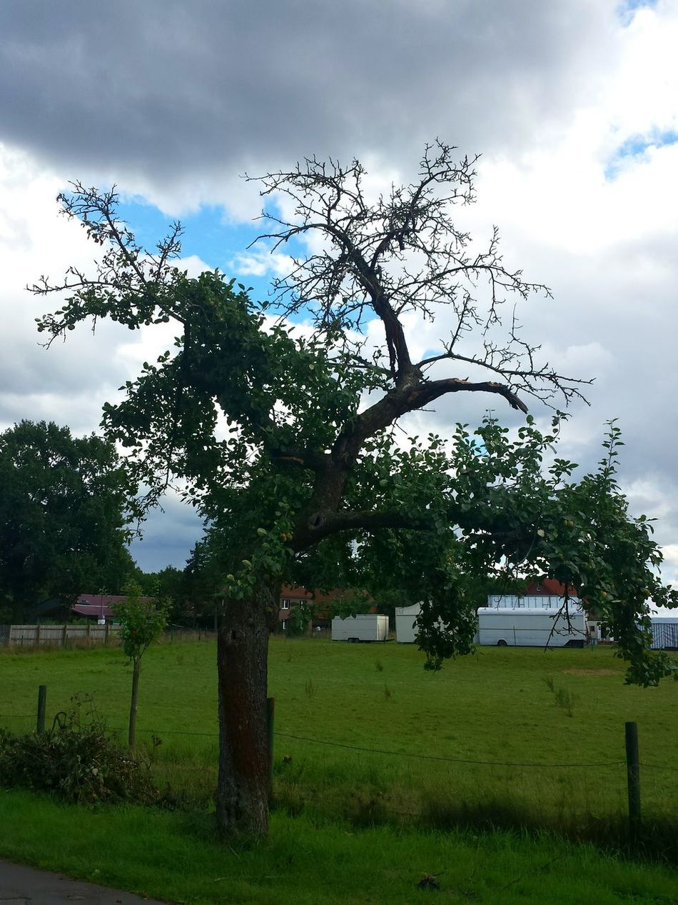 Apfelbaum  Apple Tree Against Grey And Blue Sky Against Sky Against The Bad Weather Apple Trees  Wiese  Green Meadows Ladyphotographerofthemonth Showcase August Landscape Green Grey Blue Bad Weather Clouds Trees Hugging A Tree Tree Lover Fruit Tree