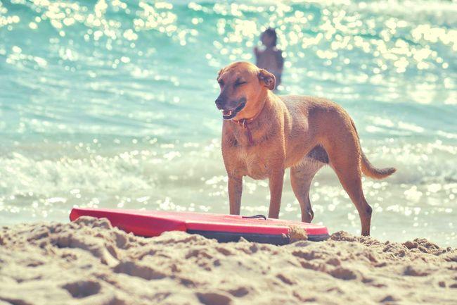 Dog on vacation Vacation Dog Relaxed Dog Beach Dog On Beach Dog Photography Beach Time Sunny Day
