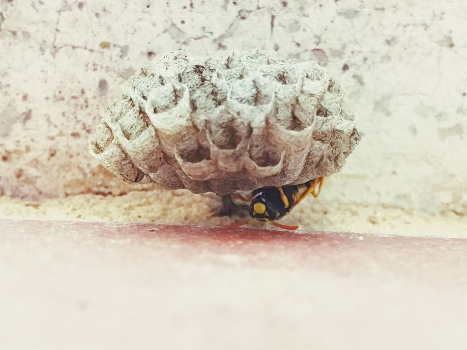 Patterns Repetition Hexagonal Wasps Nest Geometric Textured  Adapted To The City Animals In The Wild Backgrounds Animal Themes Geometry Nesting Wasp Nest Wasp Honeycomb Hornet Nest Pattern One Animal Close-up Insect No People Nature Outdoors Day