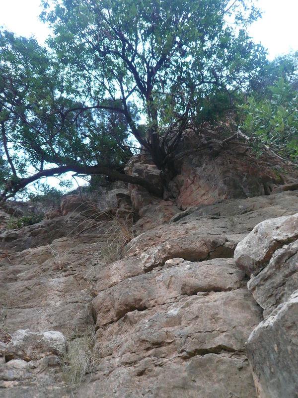 ROCK TREE ROCKS TREE Rock Harsh Landscape Mountain Rock Nature Rock Tree Rocks Up View
