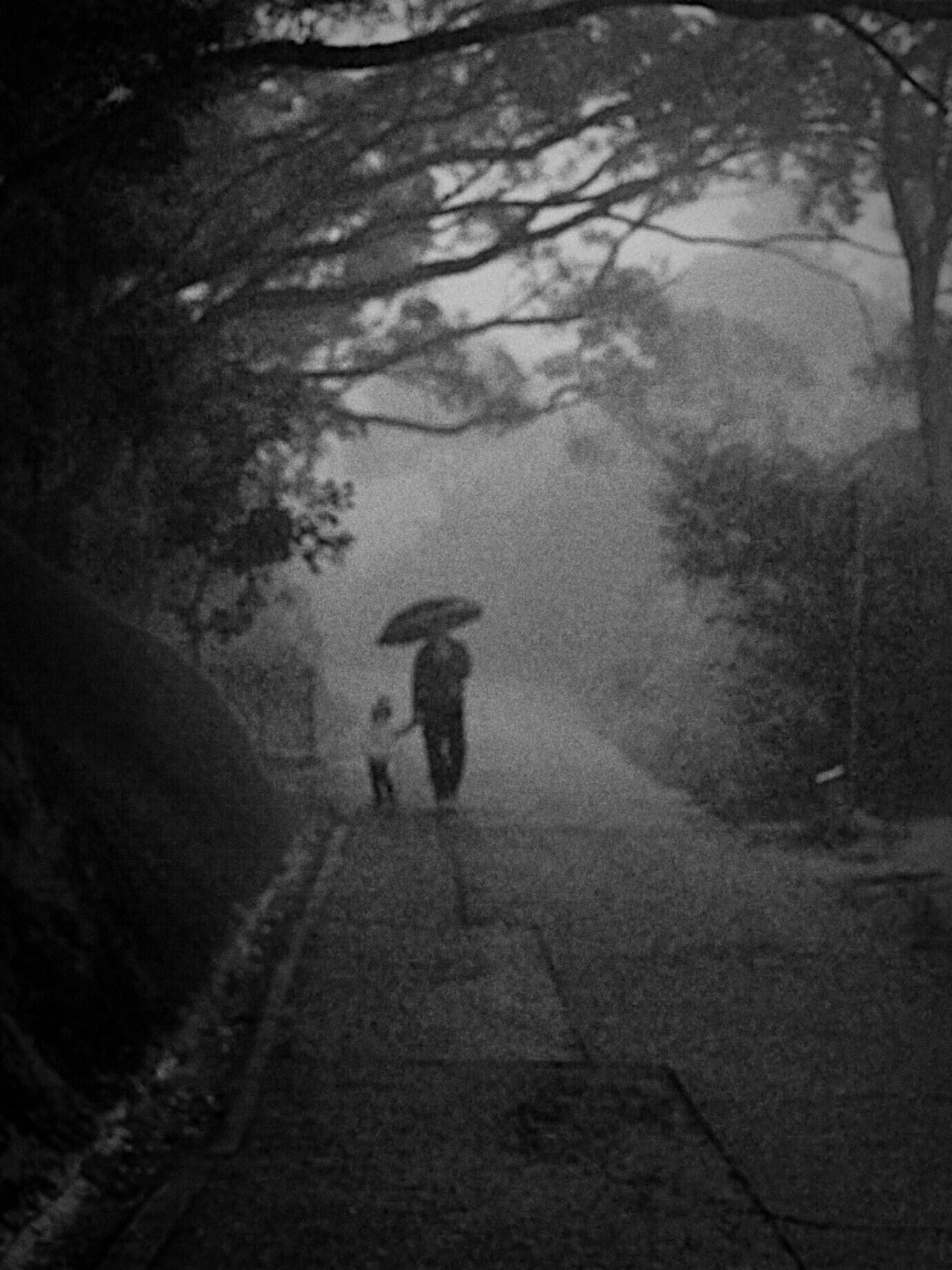 Walking Real People Tree Outdoors Day Road Nature Water Rainy Days Rural Scene People Watching People Walking  Misty Morning Misty Landscape Black And White Black & White Olympus OM-D EM-1 Blurred Out Of Focus