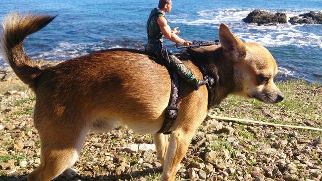 Clouds Dog Nature SouthFrance Sea Chihuahua Heman Art Action Sun Fun Boytoys