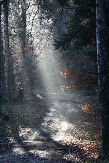 Beautiful Tree Beauty In Nature Forest Lonley No People Spotlight Sun Sunshining Time