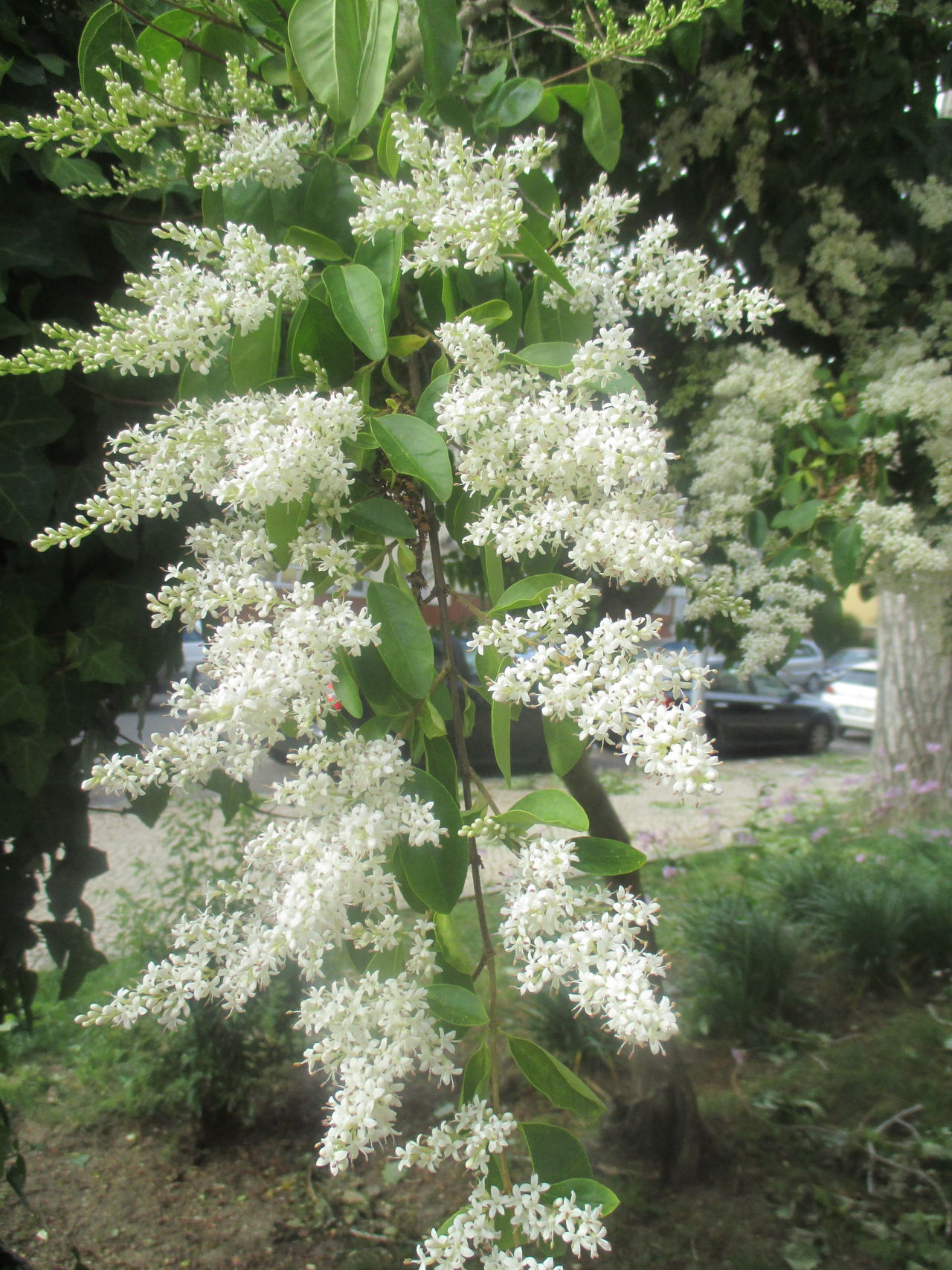 #elegance #fragance #fragility #new Life #romantic #scent Beauty In Nature Blooming Blooming Flower Day Flourishing Flower Fragility Freshness Green Color Growth Leaf Nature No People Outdoors Plant Rebirth Romantic Beauty Spring Tree