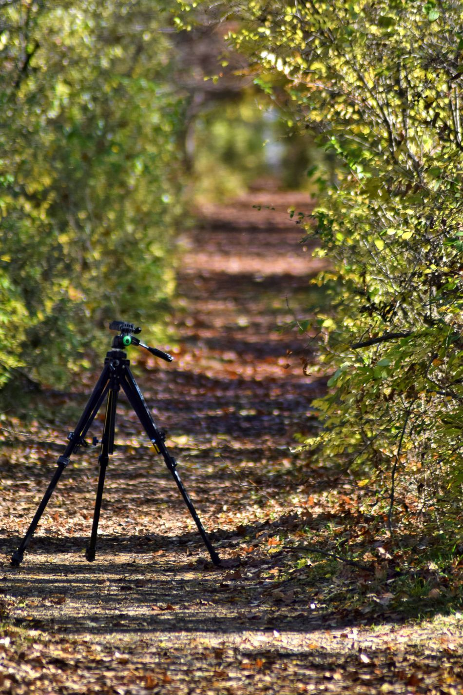 Focus On Foreground Nature Outdoors Day No People Tree Close-up Tripod Tripod At Its Finest Tripod Photography Hiking Trail Hiking View Tree Canopy