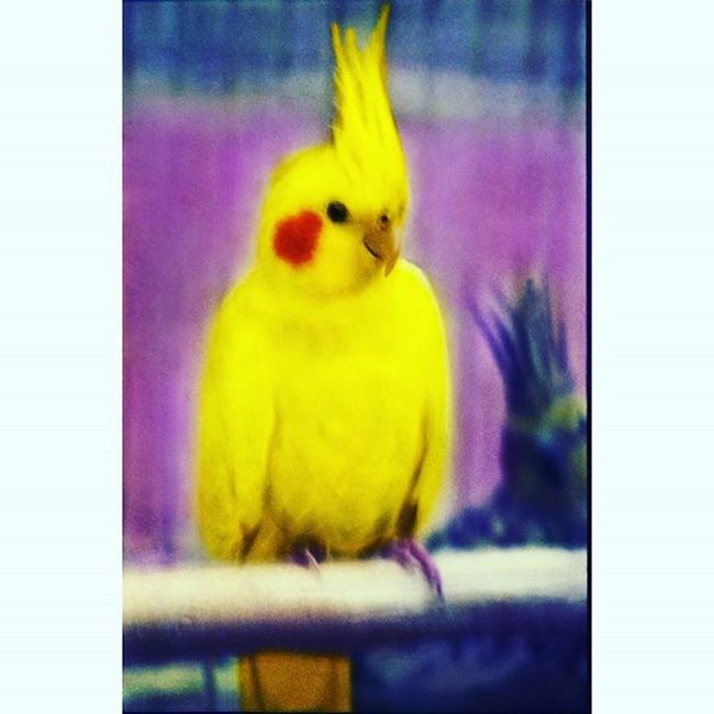 цветвинтерьере цветныекартинки Film Filmfoto 35mm Analogphotography Art Decor Design