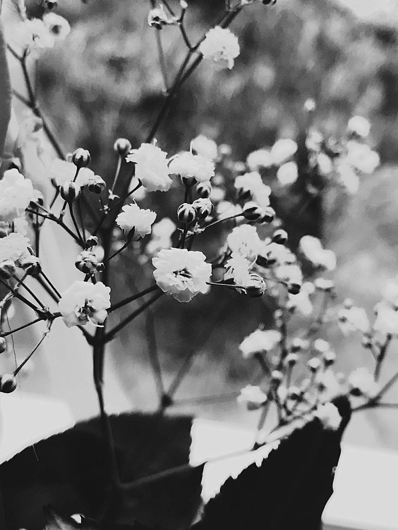 Flowers Blurry
