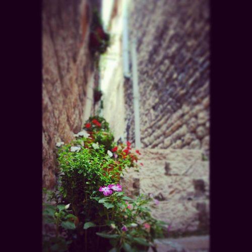 Instasize Sainte_eminie Gorge_du_tarn France france Tarn holidays vacances tourisme like like4like bestoftheday picoftheday pic picture photo photooftheday day ruelle stone pierre fleurs flowers