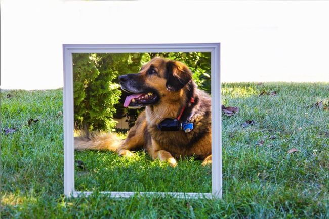 Saw this on the sd card after taking it and absolutely loved it 😍 German Shepherd Beagle GSD Gsdlove Hanging Out Hello World Taking Photos Check This Out Hi! Happy Mirror Mirrored Mirror Picture Mirror Reflection Outdoors Outdoor Photography Photography Enjoying Life Puppy Dog Dog Love Nature Looking Away
