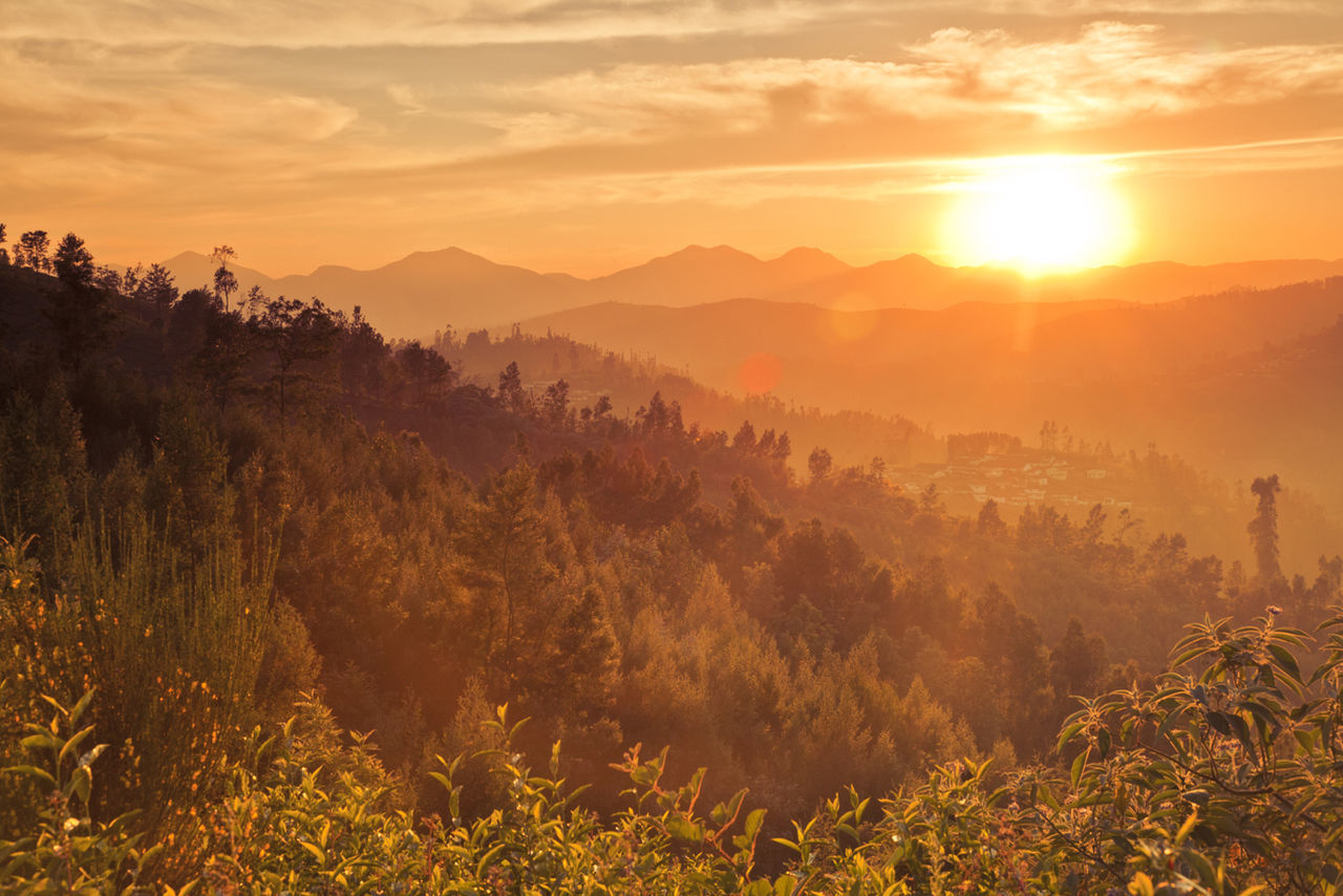 Scenic View Of Forest During Sunset