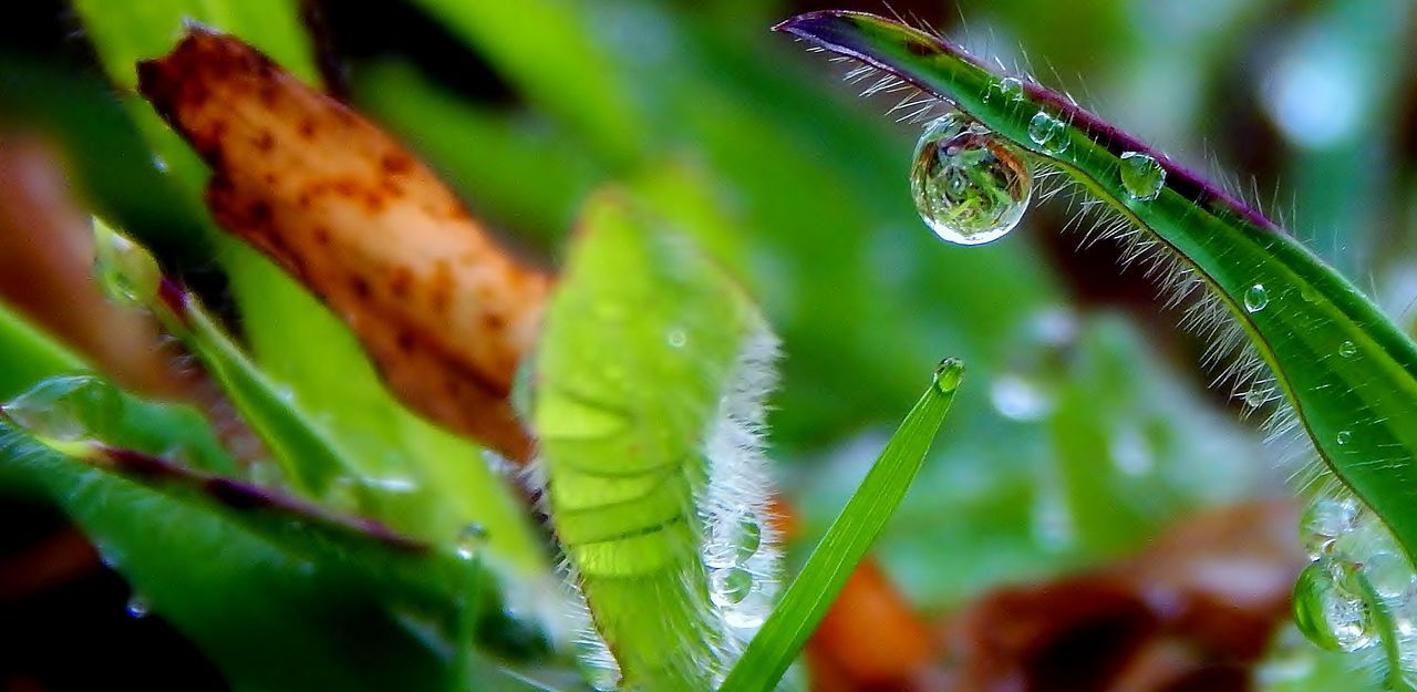 Nature Close-up Green Color Focus On Foreground Beauty In Nature Spider Web Leaf No People Insect Outdoors Fragility Day Web Drop Full Frame Water Freshness Splashing Maximum Closeness First Eyeem Photo Capture The Moment RainDrop Motion Backgrounds Check This Out
