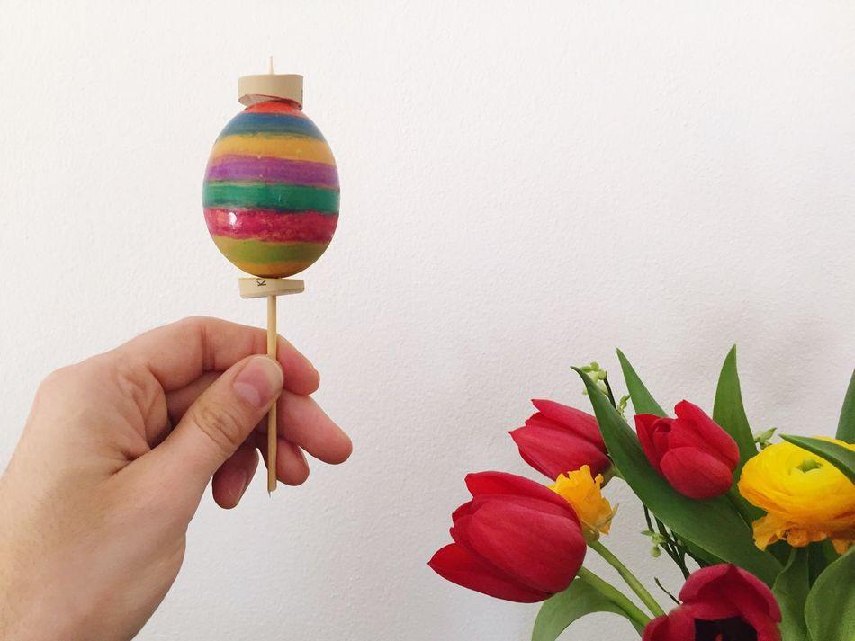 Beautiful stock photos of tulip, Close-Up, Cultures, Decoration, Easter Egg