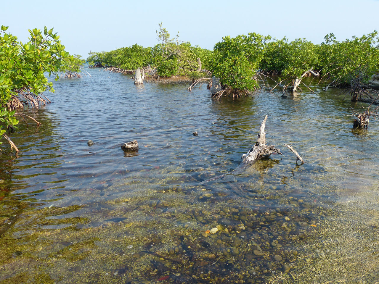 Beauty In Nature Clear Water Mangroves Nature Tranquil Scene Tranquility Water Wildlife Belize  Travel Travel Photography Travel Destinations