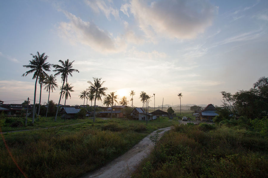 Path to small village (local call kampung) with row of coconut trees. Coconut Beauty In Nature Building Exterior Built Structure Cloud - Sky Coconut Trees Countryside Day Grass Landscape Nature No People Outdoors Palm Tree Road Rurual Scene Scenics Sky Sunset Tranquility Tree