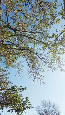 Trees And Sky Tree Jehovahscreation