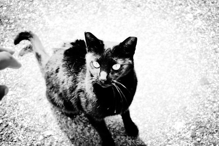 Thecat Ogato