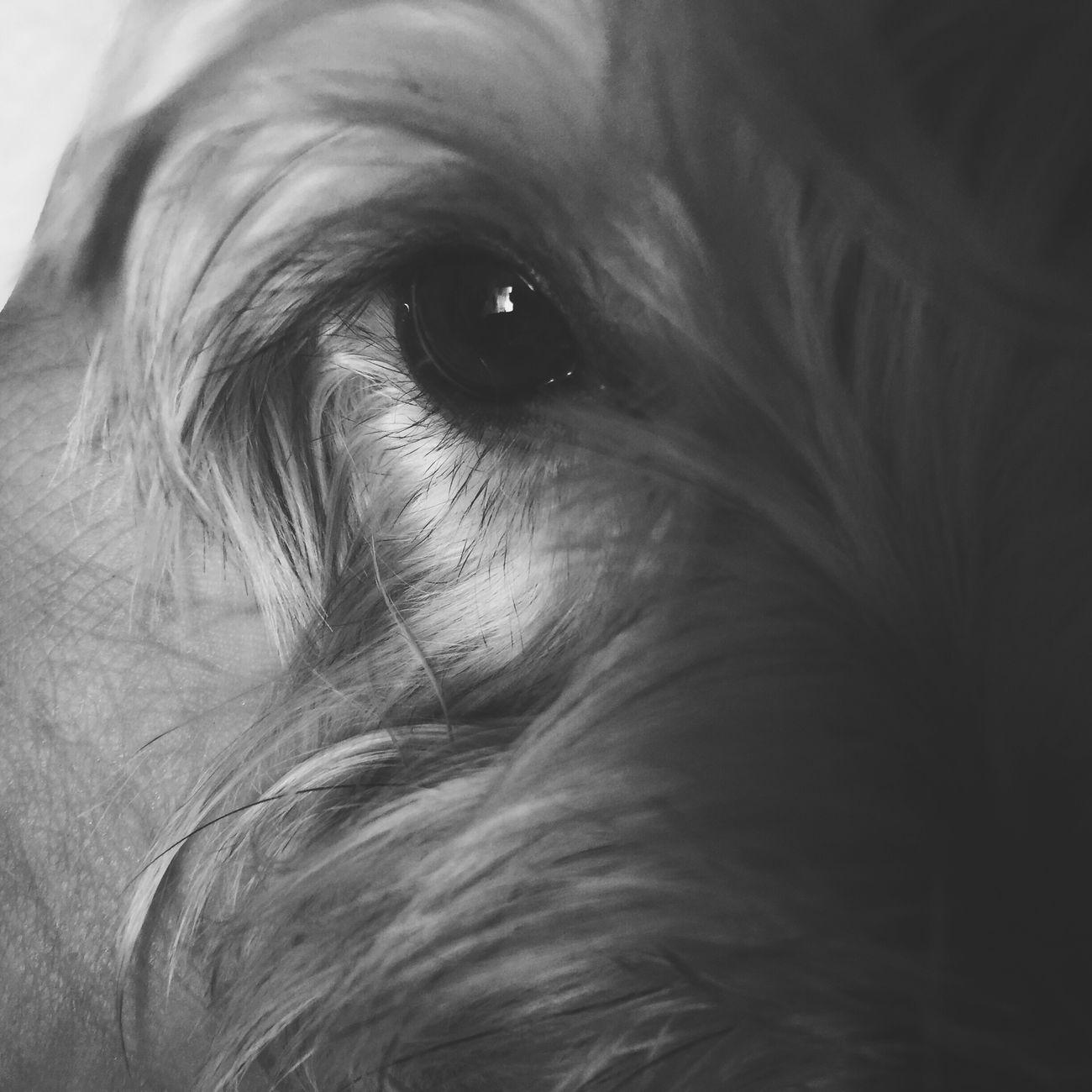 Cuando los ojos de tu 🐶 me dan inspiración 😊