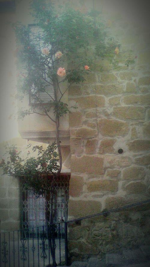 Garden Photography Flowers Eyeemnaturelover EyeEm Nature Lover Pueblo Mágico Arboles , Naturaleza