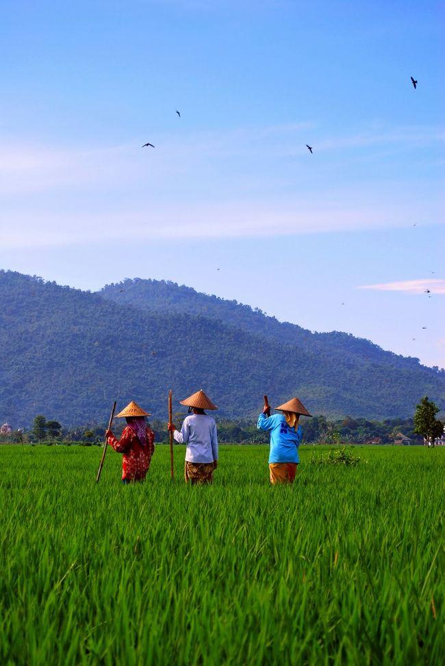 Melong Pare. Gerung, West Lombok Tada Community EyeEm Nature Lover EyeEm Best Shots EyeEmFestival15 Showcase: NovemberLombok Island EyeEm Indonesia The Week On Eyem My Best Photo 2015 Lombok-Indonesia Wonderful Indonesia INDONESIA