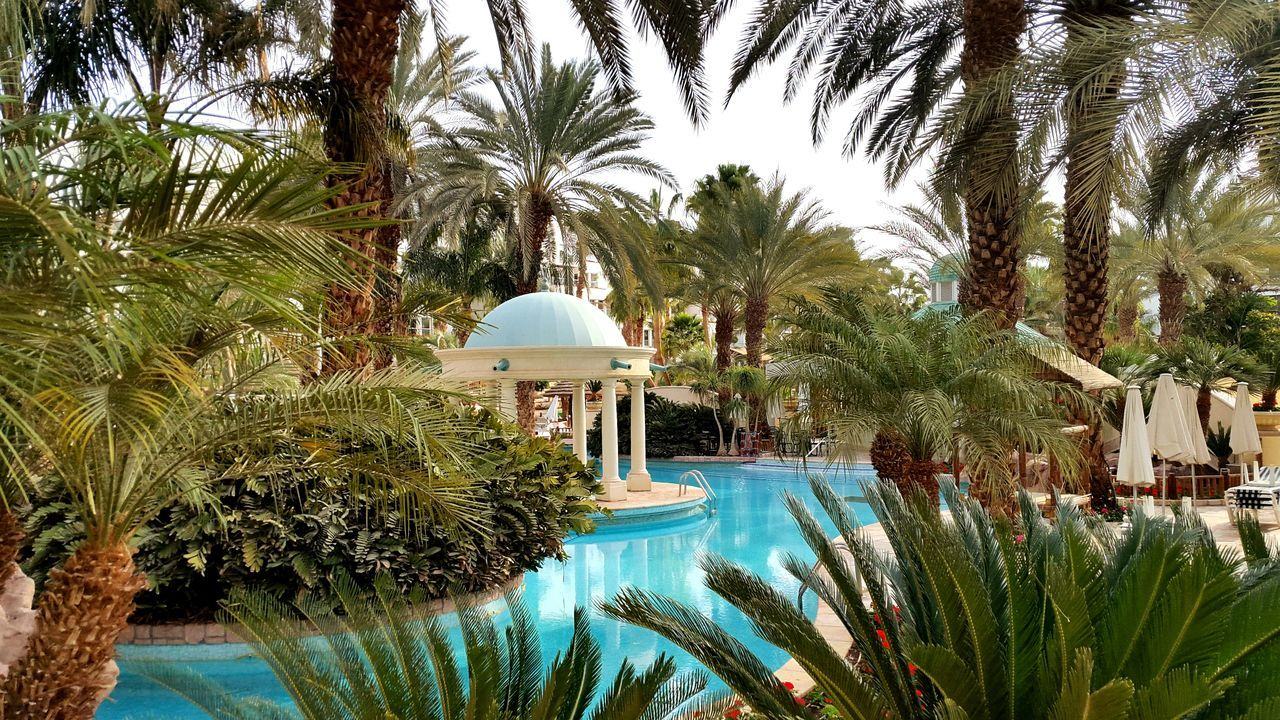 Beautiful stock photos of spa, Built Structure, Date Palm Tree, Day, Growth