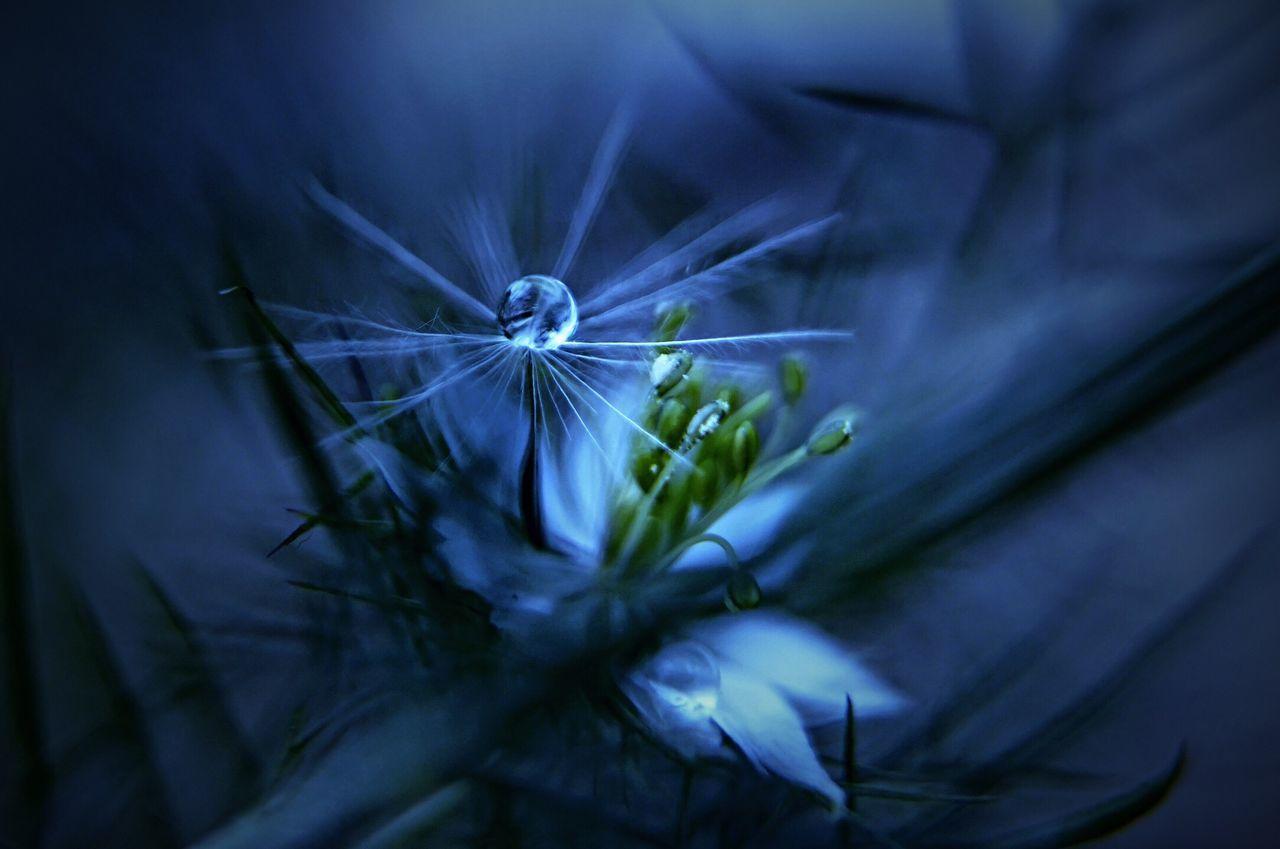 fairy & nigella Shizuku Photo Flower Nigella Flower Head Close-up Getting Inspired Bokeh Love Bokeh Bokeh Photo Fun Flowerporn SONY ILCE-7M2 SONY SEL28F20 Sony α♡Love