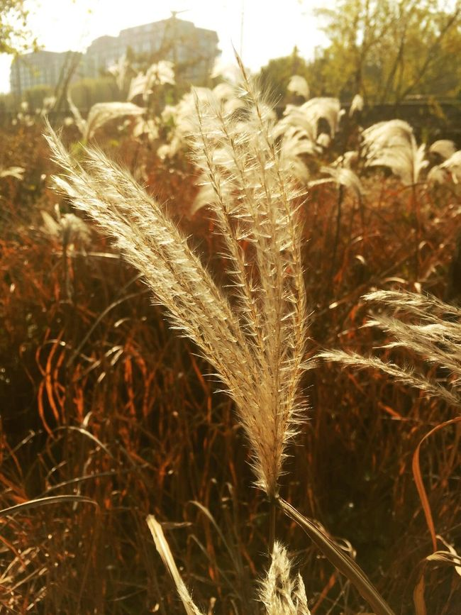 Field Growth Nature Crop  Rural Scene Cereal Plant Agriculture Close-up No People Plant Outdoors Wheat Beauty In Nature Day