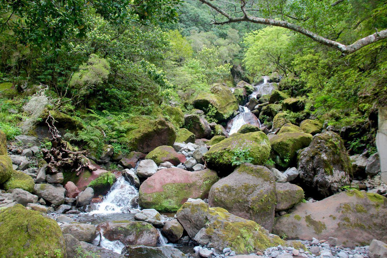 This photo was taken in Levada dos Tornos in Boaventura Levadasmadeira Madeira Madeiraisland Naturelovers Natureriver Trekking Nature Love Trekkingwalk Volcanicisland