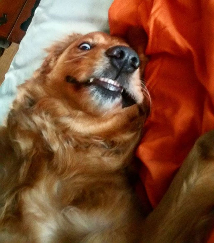 Girls Let me take a selfie! Letmetakeaselfie Selfie Duckfacefail Dogselfie Goldenretrievers Golden Chase Strikeapose Camera Funnydog Dog