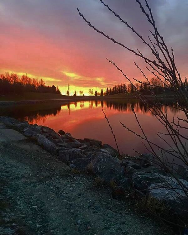 Morningwalk at Elliston park. Good time to clear the cobwebs and stretch the legs, watching the sunrise. Sunset Silhouettes Naturelovers Sunrise Sunset #sun #clouds #skylovers #sky #nature #beautifulinnature #naturalbeauty #photography #landscape Mytown YYC Calgary Elliston Park Sky And Clouds Sky_collection