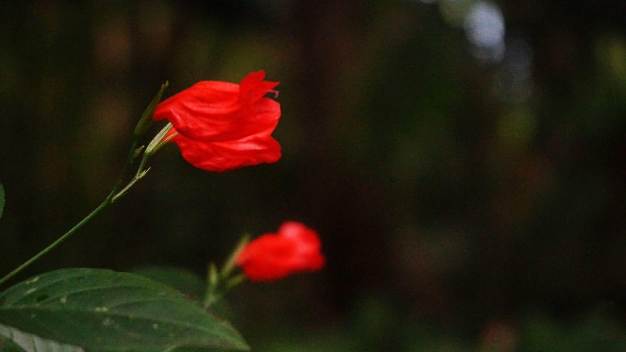 Red Flowers Blooming In Garden