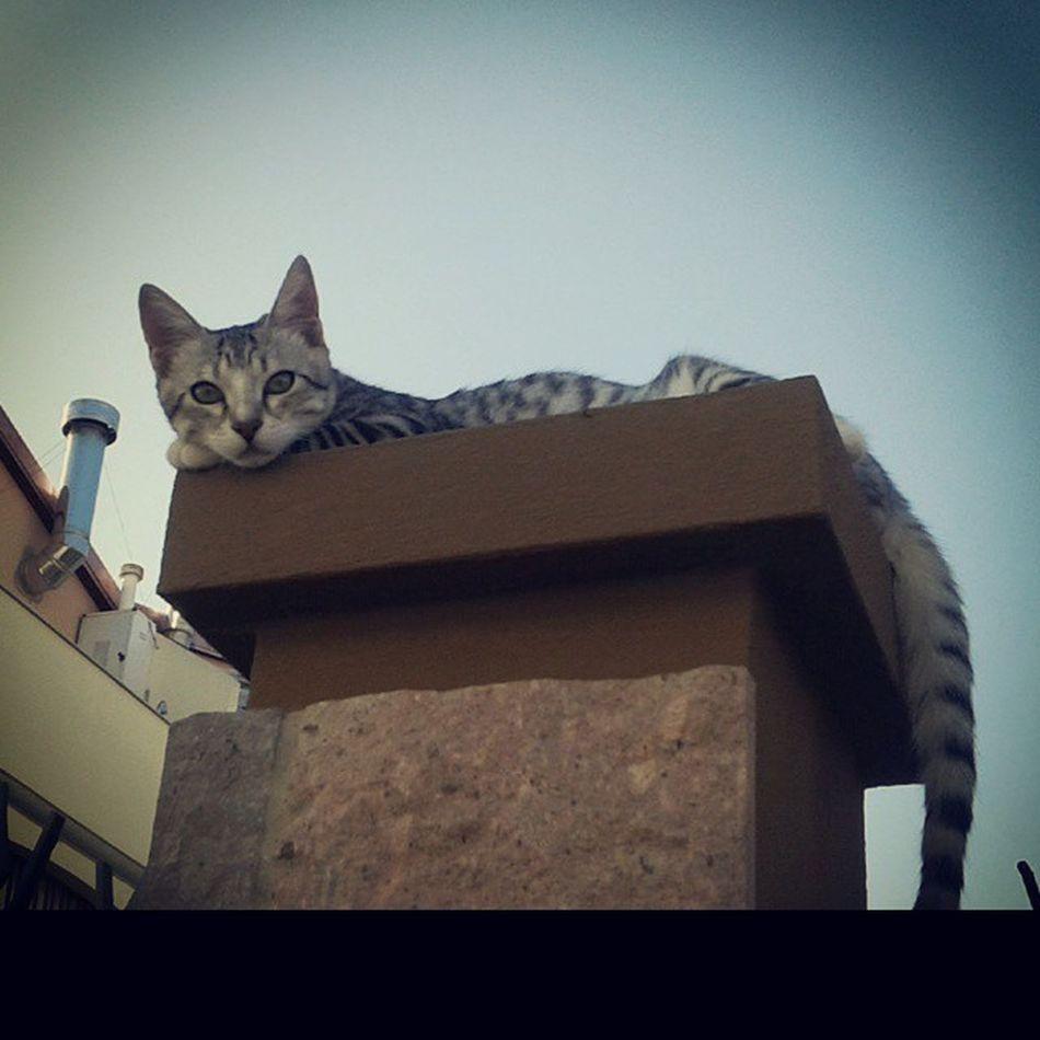beautiful friendly cat!! ♥_♥