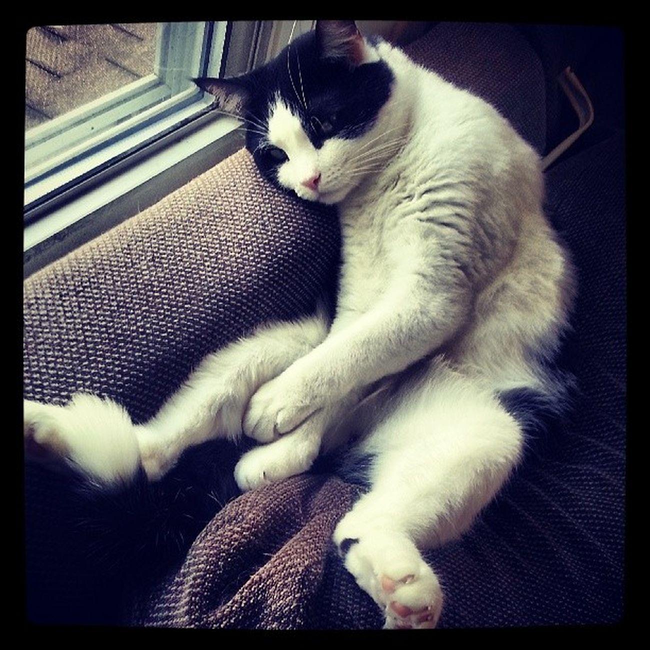 Richardthecat Catsofinstagram Tuckeredout Catssleepfunny picoftheday