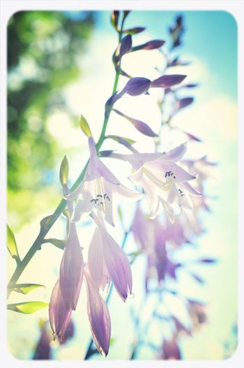 Sun Shining on the Garden Flowers