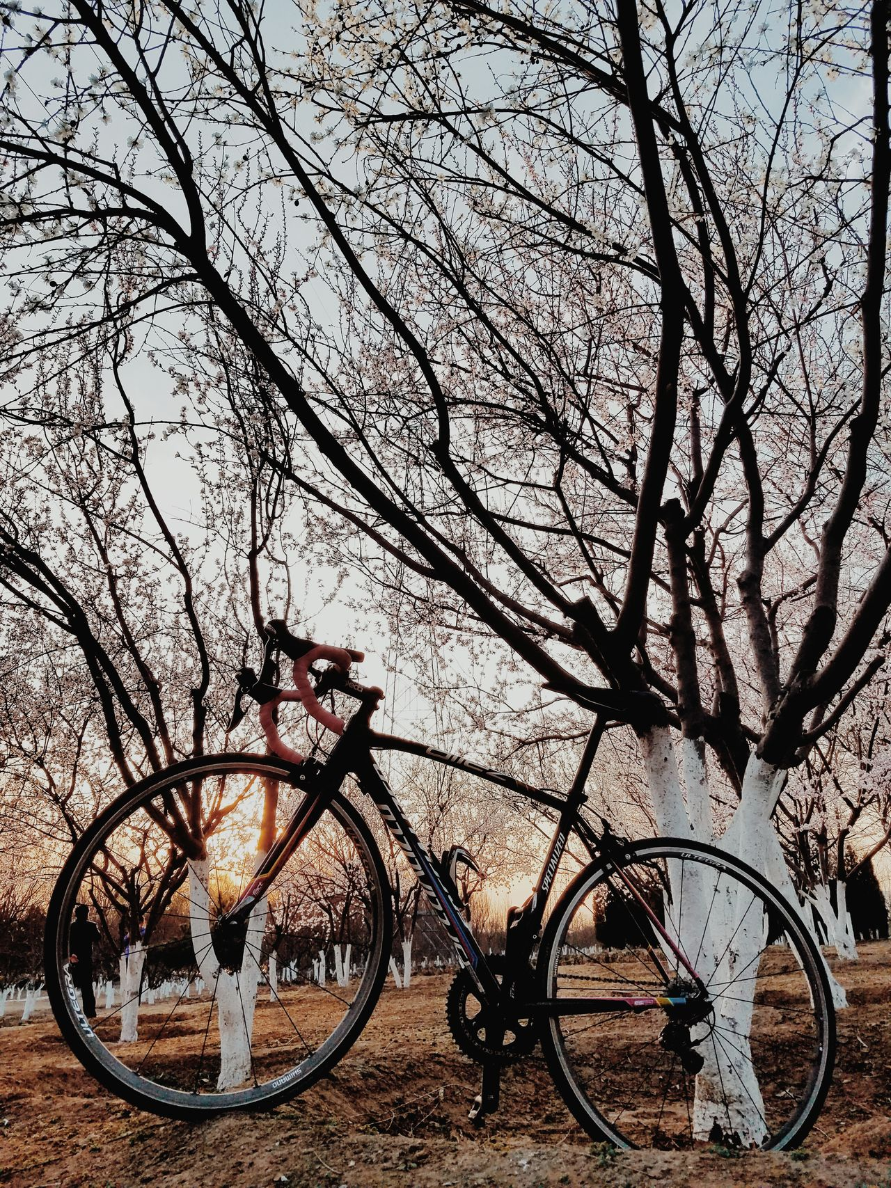 Bicycle Transportation Land Vehicle Sky Outdoors No People Nature