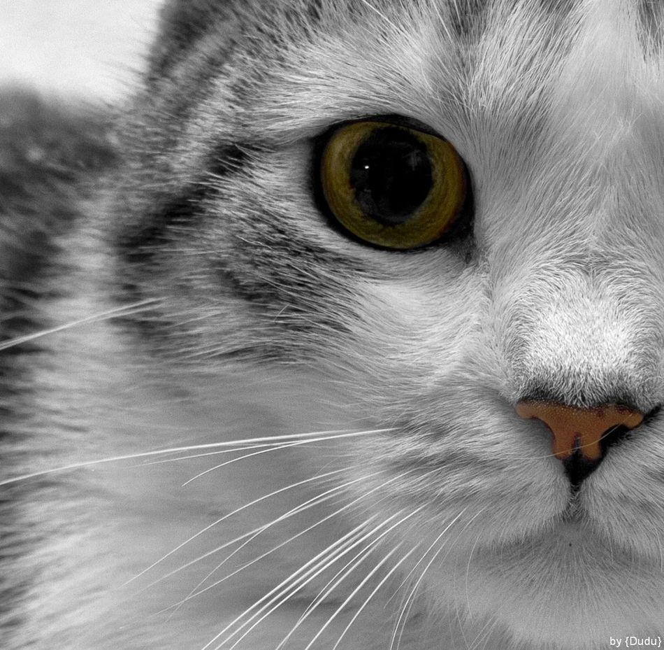 Spotty ;) Animal Eye Animal Themes Black & White Black And White Blackandwhite Photography Cat Crop  Focus On The Eyes I'm Watching You Looking At Camera Noose Pets Pussycat Relaxation Selective Color Staring