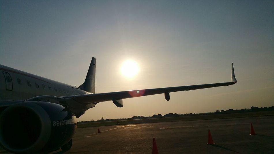 Sun Flight ✈ Shine Lifecolor