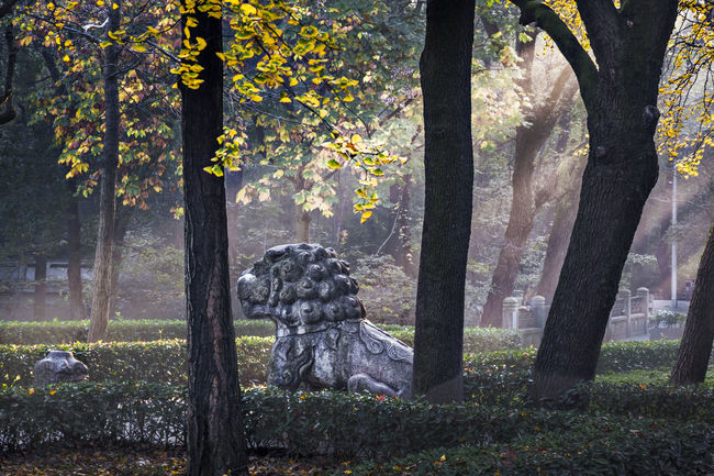 Hidden Gems-Nanjing Autumn scenery of Ming Xiaoling mausoleum Autumn Autumn Scenery Beautiful Light Famous Forest Lights Hidden Gems  History Light Ming Xiaoling Mausoleum Nature Outdoors Perspective Shinto The Early Morning Tourist Attractions Tranquil Scene Tranquility Beauty In Nature Ming Dynasty Nanjing Nature Tourist Destination Tree Trunk Trees
