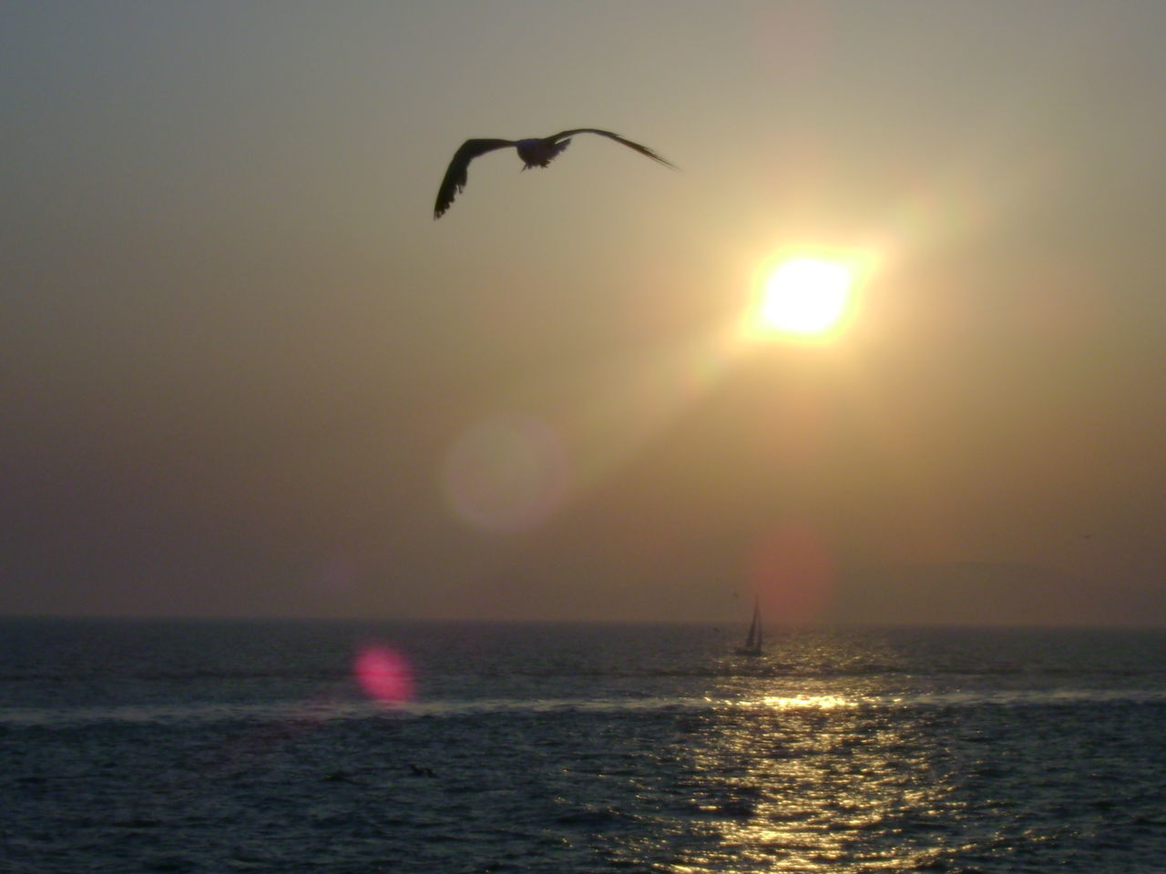 FREEDOM!! Sunset Idyllic Sunlight Horizon Over Water Atmospheric Mood Summer ☀ Sail Away, Sail Away Bird In Flight
